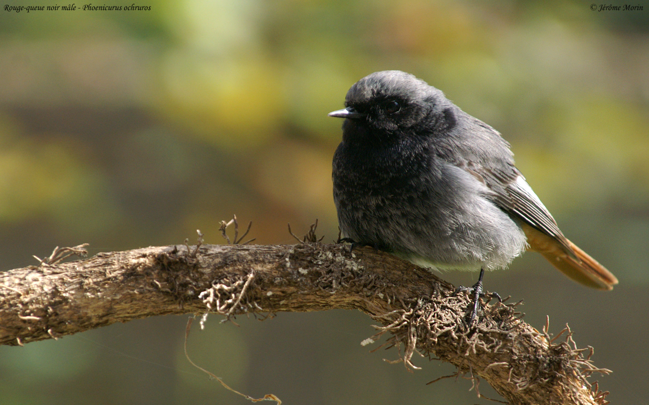 Photographies oiseaux animaux insectes images galerie for Oiseau queue rouge