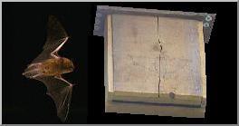 http://www.web-ornitho.com/images/graphique/nichoir%20chauve-souris.jerome.morin.web-ornitho.2.JPG